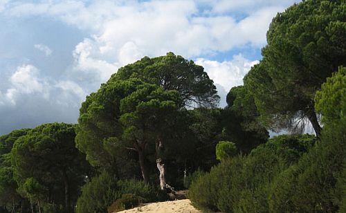 Pinares en Conil - Ferienwohnungen in Conil